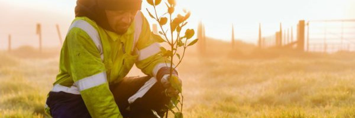 BlueScope demonstrates contribution to sustainable development